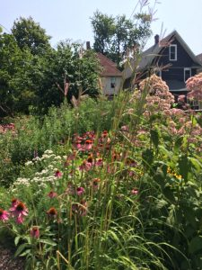 Cascade of Joe Pye, Big Bluestem, Purple Coneflowers, Mounatin Mint