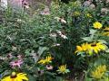 Candace's garden
