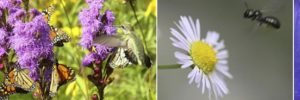 pollinators on flowers