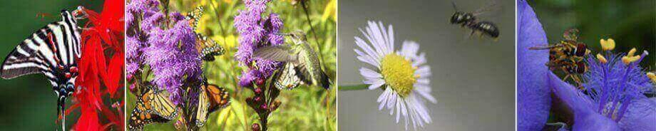 pollinators on flowers