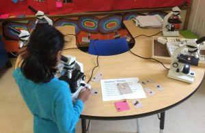 Student observes a pollinator under a microscope