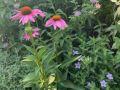 Adrian's garden